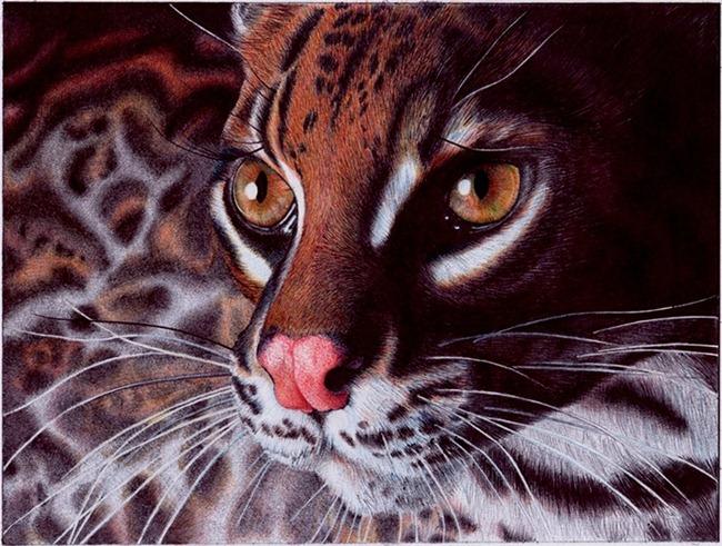 margay_cat___bic_ballpoint_pen_by_vianaarts-d4nafol