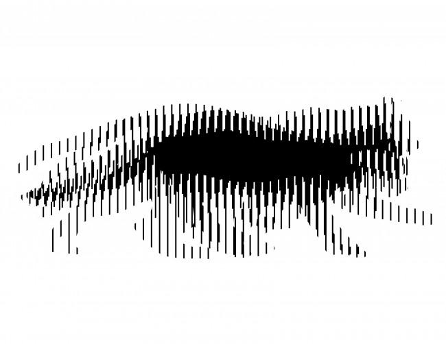 Crea tu ilusión óptica Scanimation II ceslava 0