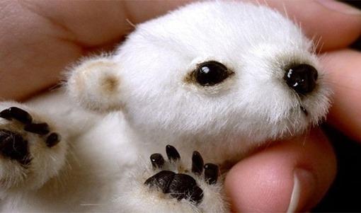 bebe-oso-polar