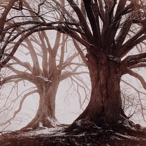 54-MARIKO-KLUG-3rdTrees