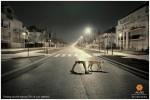 Más de 200 campañas «Si bebes… No conduzcas» ceslava 110