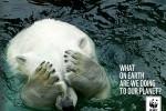 23 campañas sobre medio ambiente y protección de animales ceslava 21
