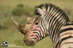 23 campañas sobre medio ambiente y protección de animales ceslava 19