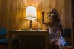 Tributo fotográfico a Chewbacca de La Guerra de las Galaxias en el MundoReal ceslava 17